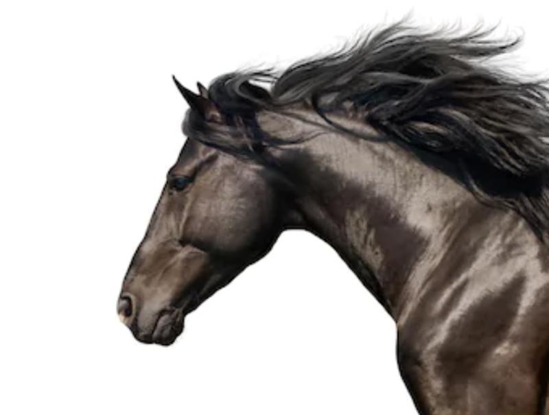 【ベトナムウクレレ by G-Labo】  荒馬を御して、その先の未来へ! vol.87